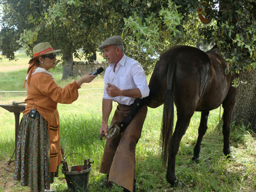 Herrar caballos y mulos