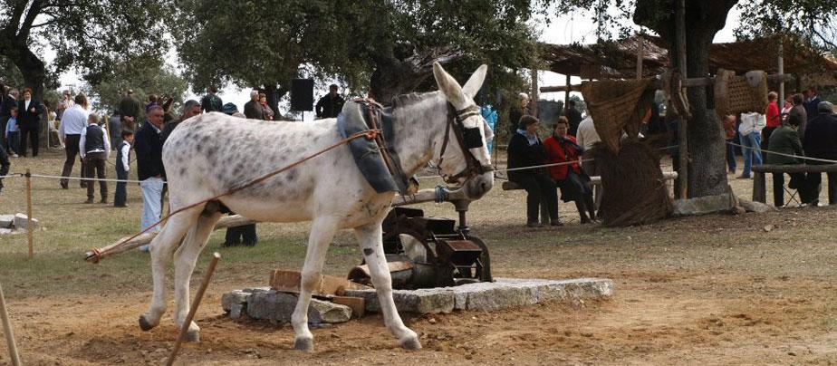 Nuestras Tradiciones 2012